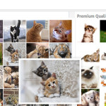 How to Find Free Flickr Images For WordPress Blog